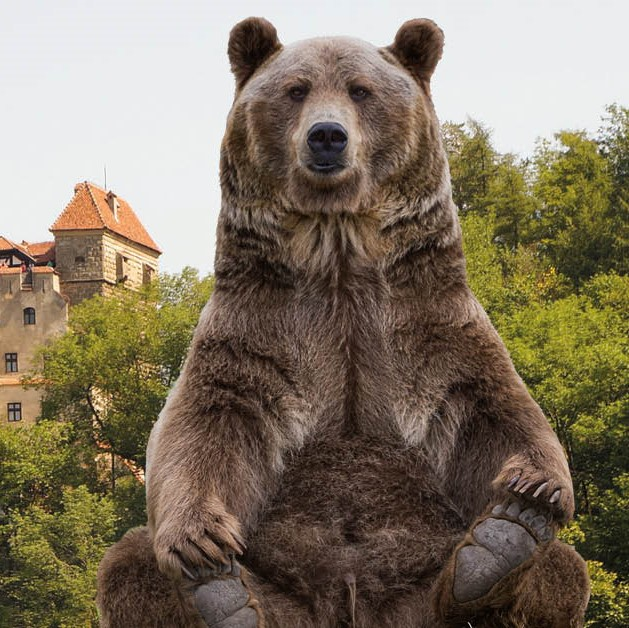 Bear Necessities Trek Transylvania 2019 for animal and wildlife charities Dream Challenges Transylvania