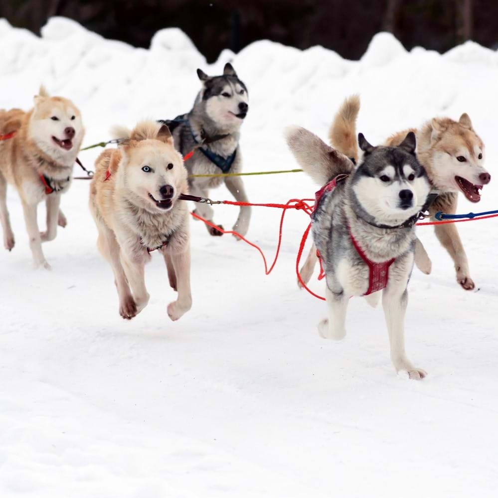 Sled through northern Norway, Finland and Sweden with a team of huskies and finish at the Ice Hotel in Kiruna