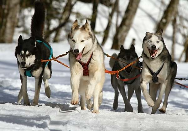 Husky Sled Challenge Norway, Sweden and Finland, Dream Challenges Charity Challenge 2019
