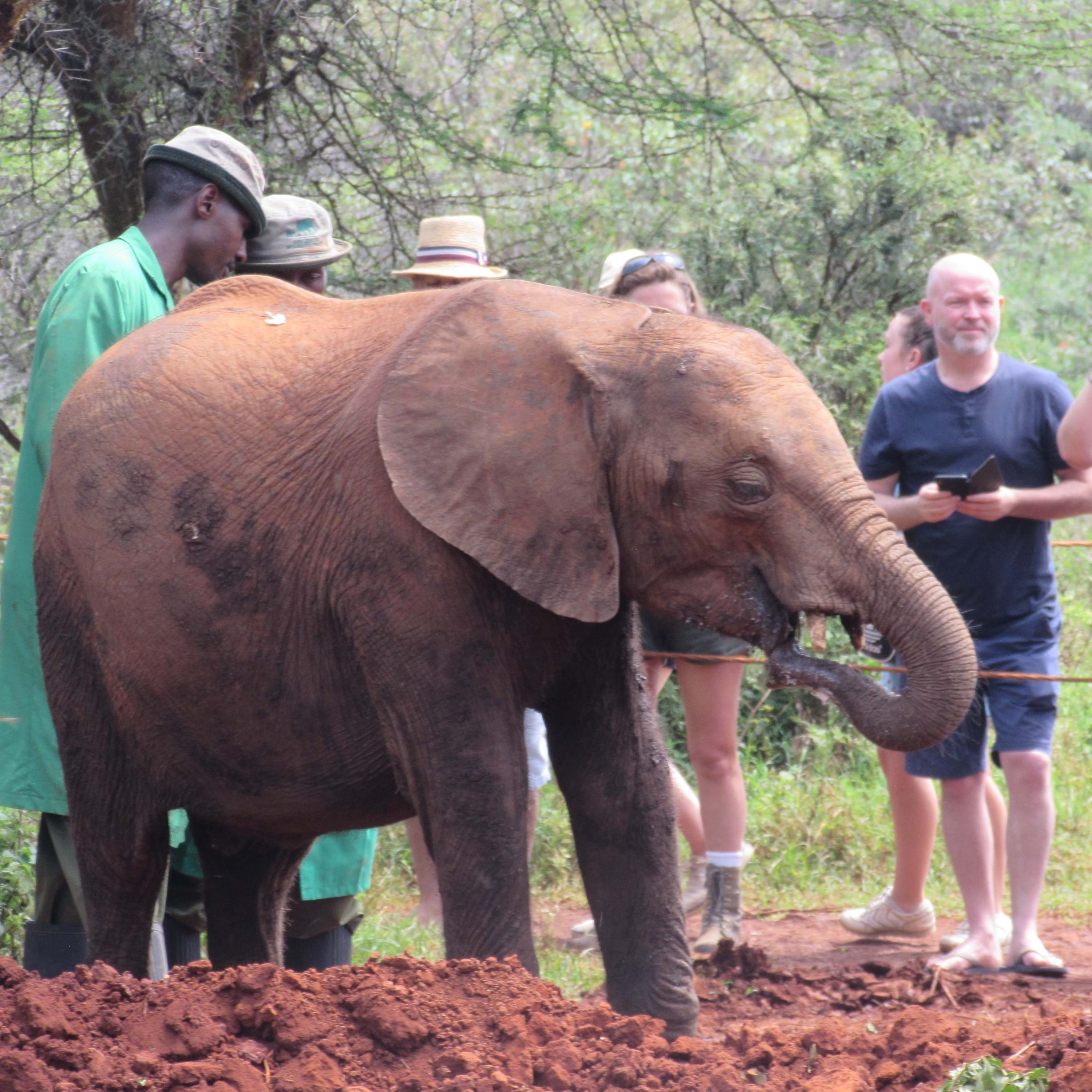 Isobel Ripley's adopted elephant at the Sheldrick Wildlife Trust in Nairobi